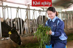 Bỏ phố về quê nuôi bò sản xuất sữa thanh trùng