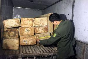 Bắt xe chở gỗ pơ mu quý trên đường đi tiêu thụ