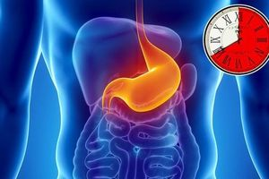 Mất bao nhiều thời gian để dạ dày tiêu thụ thực phẩm?