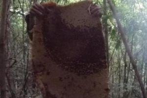 Hòa Bình: Khóc thét, liên tục bị ong dại tấn công, có người tử vong