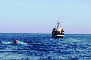 Xác minh tung tích tàu lạ đâm va tàu cá Quảng Nam gần Hoàng Sa