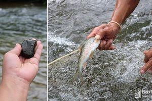 Săn cá mát đặc sản bằng cách ném đá nhử của người Thái ở Nghệ An