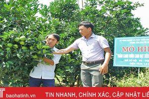 Mát ngọt những vườn cam Vietgap ở Vũ Quang