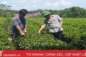 Kim ngạch xuất khẩu chè của Hà Tĩnh đạt 3,4 triệu USD