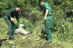 Quảng Trị: Thả các cá thể động vật hoang dã trở về môi trường tự nhiên