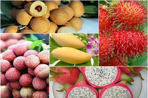 Ngành rau quả Việt chưa xứng tầm với tiềm năng