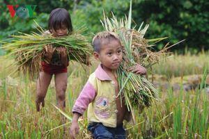 Hạt thóc nghĩa tình nơi biên giới Lai Châu