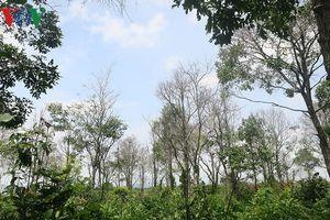 Bình Thuận: Chưa tìm ra đối tượng đầu độc rừng Tà Cú
