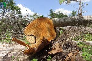 Thêm một điểm phá rừng mới ở Khu bảo tồn Tà Cú
