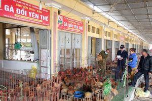 Việt Nam cơ bản khống chế thành công dịch cúm gia cầm