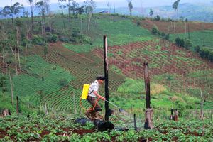 Chuyển đổi đất có nguồn gốc nông lâm trường: Vẫn nhiều khó khăn