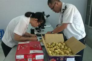 Tạo điều kiện thông thoáng cho doanh nghiệp XK nông sản chiếu xạ
