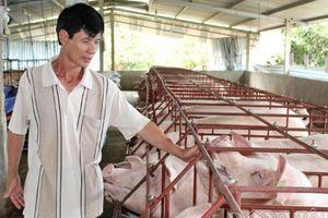 Cục Chăn nuôi: Phải giảm giá lợn hơi, dù nhiều người không đồng ý