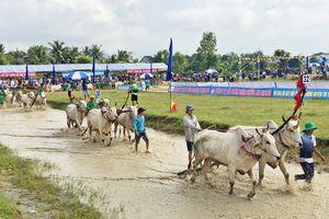 Đặc sắc Lễ hội đua bò Bảy Núi