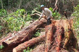 Phá rừng ở Khu bảo tồn thiên nhiên Tà Cú