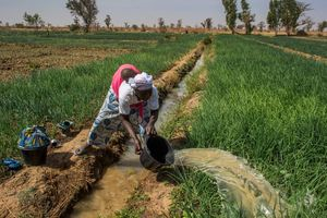 Liên Hợp Quốc khuyến khích đầu tư vào nông nghiệp để giữ chân thanh niên tại khu vực nông thôn