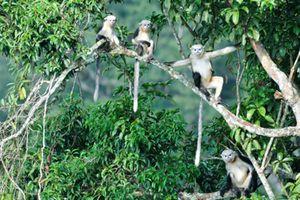 Giải quyết các thách thức về bảo tồn đa dạng sinh học