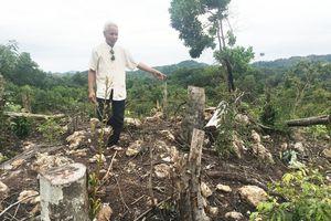 Quảng Ninh: Rừng phòng hộ hồ Trúc Bài Sơn kêu cứu