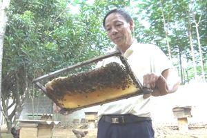 Nuôi ong làm giàu từ rừng nguyên sinh Cúc Phương