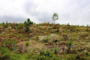 Lâm Đồng: Khởi tố 2 doanh nghiệp phá rừng tại dự án được giao