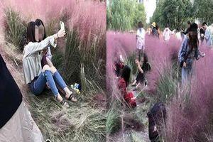 Phẫn nộ clip khách tham quan thiếu ý thức, giẫm nát cánh đồng cỏ hồng