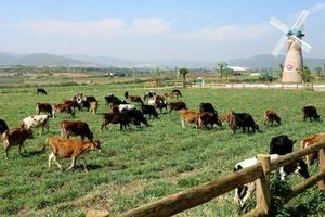 F&N Dairy tiếp tục thông báo mua 17,4 triệu cổ phiếu Vinamilk