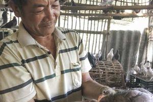 Nuôi chim đẻ sòn sòn, bán chim non làm món ăn, thu 10 triệu/tháng