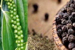 Giá nông sản hôm nay 18/10: Giá cà phê sắp chạm mốc 38.000 đồng/kg, giá tiêu không đổi
