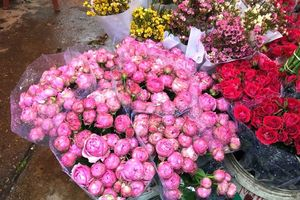 30 phút và 1.000 bông hồng: 1 kỷ lục minh chứng cho tình yêu