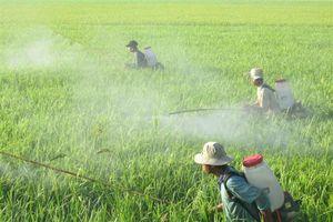 Một cây lúa, thừa hàng nghìn loại thuốc bảo vệ thực vật