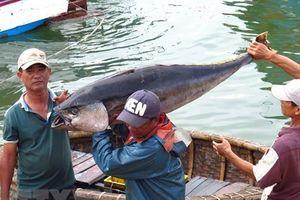 Khắc phục 'thẻ vàng' IUU: Hướng tới xây dựng nghề cá bền vững