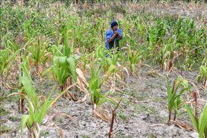 FAO nhấn mạnh lợi ích bảo hiểm rủi ro thiên tai cho các hộ nông dân 