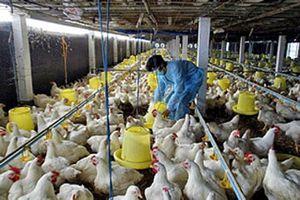 Xây chuỗi liên kết là cốt lõi phát triển ngành chăn nuôi Việt Nam