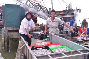 Quảng Trị: Khai thác nguồn lợi thủy sản gắn với bảo vệ hệ sinh thái môi trường biển