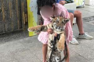 Cô bé 9 tuổi dắt... hổ đi dạo trên đường