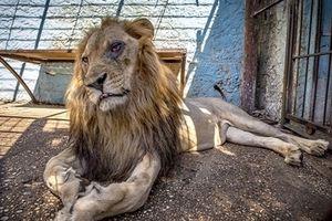 Bên trong 'sở thú địa ngục' tại Albania
