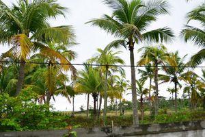 Đà Nẵng đề nghị thu hồi các dự án chậm triển khai