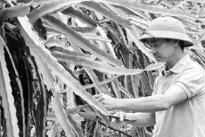 Nông dân Điện Biên tích cực xây dựng nông thôn mới