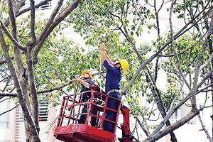 Chăm sóc, xử lý cây xanh không thông qua đấu thầu