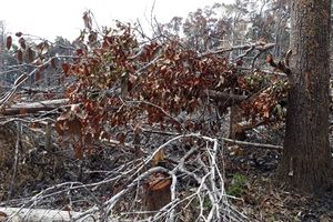 Đề nghị xử lý trách nhiệm BQL rừng phòng hộ Đắk Đoa