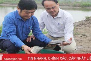 Mô hình nuôi cá rô phi theo Viet Gap cho năng suất, sản lượng cao