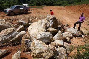 Phú Thọ: Khai thác đá lộng hành, quần nát ruộng lúa đang mùa thu hoạch
