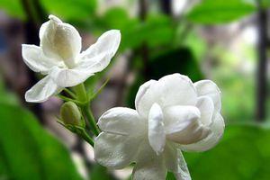 Nếu bạn hay stress, nổi điên hãy trồng loại cây 'thần dược' rẻ tiền này