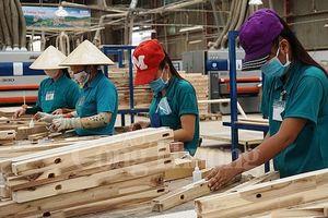Liên kết chuỗi để xây dựng nguồn nguyên liệu bền vững cho gỗ Việt