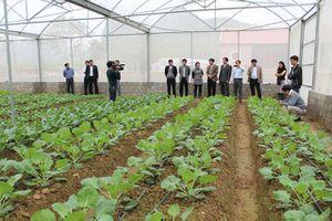 Để Nông nghiệp hữu cơ không theo kiểu phong trào
