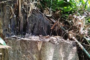 6 cán bộ kiểm lâm bị triệu tập do liên quan đến vụ phá rừng