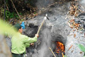 Quản lý, bảo vệ rừng ở Hoài Nhơn (Bình Định): Kiểm soát chặt, xử lý nghiêm!