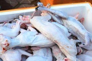 Hà Tĩnh: Bắt giữ xe khách chở gần một tấn thịt mèo không rõ nguồn góc