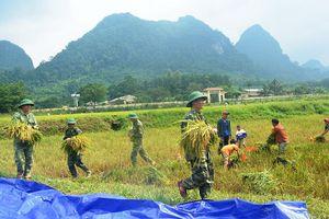 Quảng Bình: Đồng bào Rục được mùa lúa nước chưa từng có