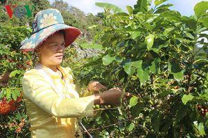 Chuyển đổi cách làm kinh tế, phụ nữ Sơn La làm giàu ngay trên quê nhà